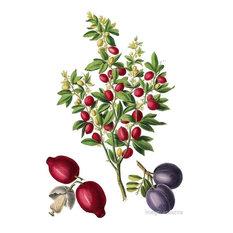 """Trifoliata Citrus"" Botanical Print, 58x84 cm"