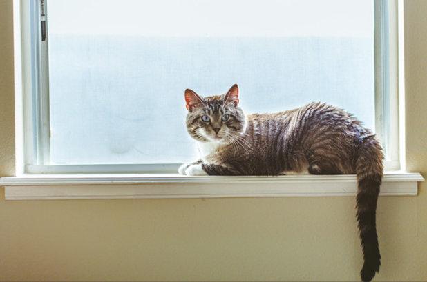 How Do I... Pet Proof my Home?