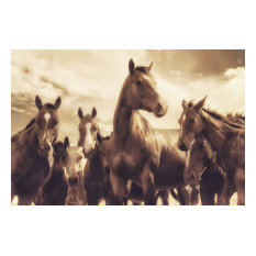 Franklin Arts - Horse Fine Art Photography Wall Art, 60x40 - Prints and Posters