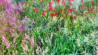 Feldgras und Mohnblumen