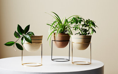 Expert Tips: How to Display & Style Indoor Plants