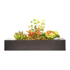 "Succulents in Wooden Planter 14""x6""x8"""