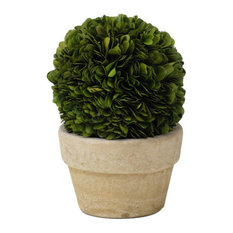 "7"" Tall Preserved Boxwood Topiary, Single Ball"