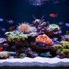 Водный мир: Как оформить аквариум внутри