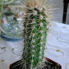 My Cactus & Succulents