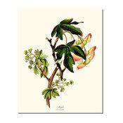 Vintage Botanical Tree Leaf Art : Maple