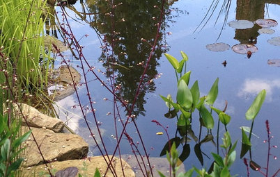 Ask a Garden Designer: How Can I Bring Water into my Garden?
