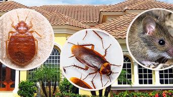 Mosquito Pest Control Perth