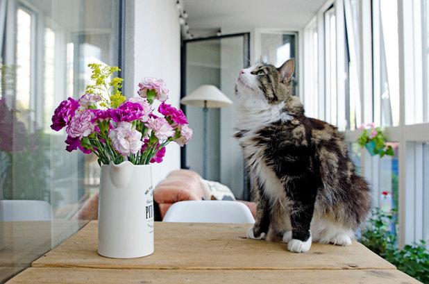 Quali piante domestiche sono tossiche per cani e gatti - Allontanare i gatti dal giardino ...