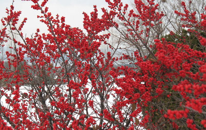 6 Rockin' Red Plants for Winter Gardens