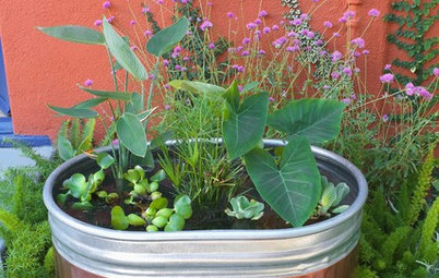 A Colorful DIY Water Garden for Your Patio