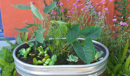 Container Gardens Tips From The Experts - 8 refreshing diy container water gardens