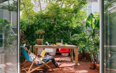 Die besten Sichtschutzpflanzen für Garten und Balkon
