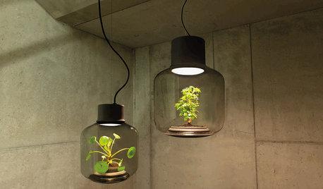 Diseño y tecnología: Descubre la lámpara en la que crecen plantas