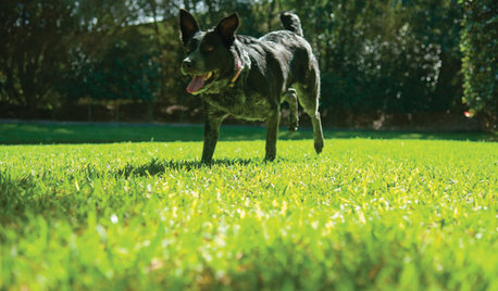 How Do I... Get My Lawn Looking Spring-tastic?