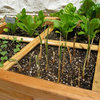 Square Foot Gardening: l'Orto in Trenta Centimetri