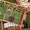 Så let er det: Dyrk smagfulde spirer og mikrogrønt i køkkenet