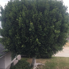 Urban Forest Solutions Tree Care 908102 Anaheim Ca