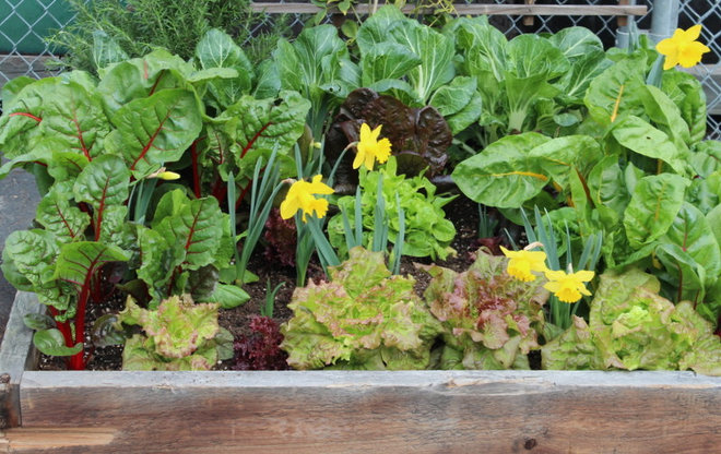 Grow a kitchen garden in 16 square feet