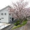 春爛漫、桜を楽しむ家