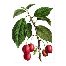 """Cherry"" Botanical Print, 60x80 cm"