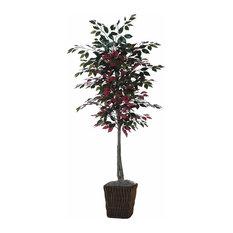 6' Capensia Tree in Square Willow Cont
