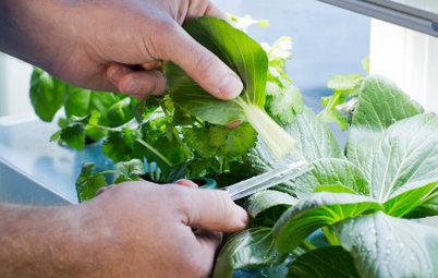 Hydro-hvad-for-noget? Sådan dyrker du spiselige planter uden jord