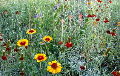 Create a Wildlife-Friendly Meadow in Your Small Garden