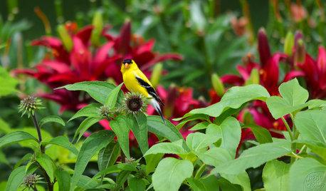 13 North American Backyard Birds to Know