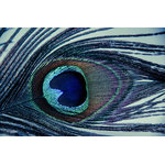 "Pi Photography Wall Art and Fine Art - ""Eye of the Peacock"" Nature Photograph Unframed Wall Art Print, 20""x30"" - Eye of the Peacock, Abstract Nature Photography Wall Art Prints"