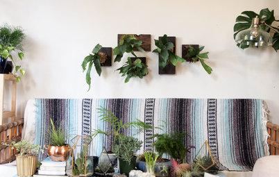 DIY Display for Staghorn Ferns