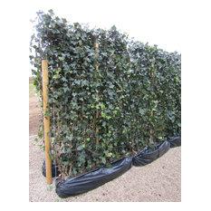 Ivy Living Green Screens