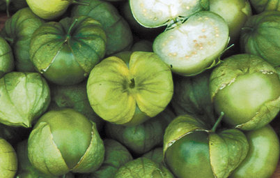 Summer Crops: How to Grow Tomatillos