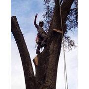 Crews Tree Service's photo