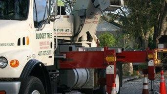 A Budget Tree Service, Inc.