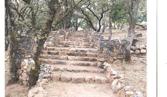 Stone Steps through an Oak forest
