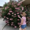 Adelfa: La elección perfecta para un jardín colorido