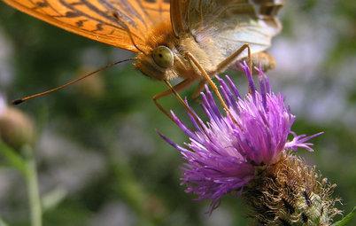 Comment attirer les papillons dans votre jardin et les protéger ?