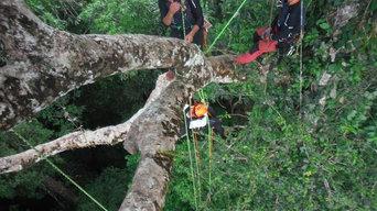 Poda en altura de árboles