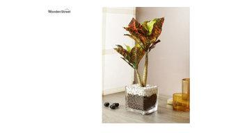 Buy glass vases & pots online @ 55% OFF   Wooden Street