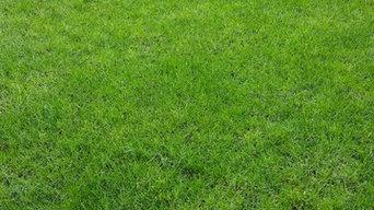 Lawn Care Program-Lee