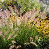 11 Ideen für robuste, winterharte Gräser & Pflanzen im Garten