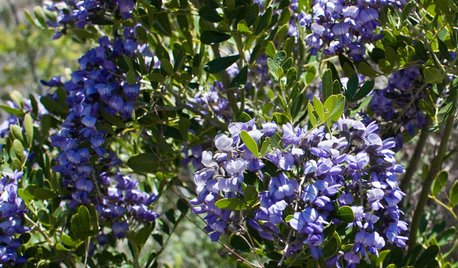6 Unsung Spring-Blooming Trees