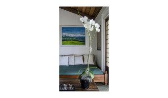 Classic Orchid Arrangement