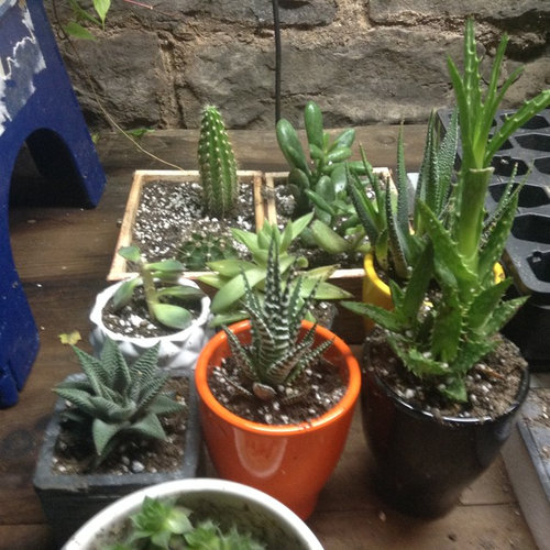 Brilliant Rescued Plants From Cvs Pharmacy Ids Would Be Nice Pretty Camellatalisay Diy Chair Ideas Camellatalisaycom