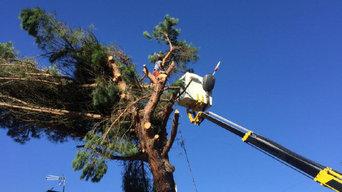 Opérations d'élagage d'arbres à Bois-le-Roi 77