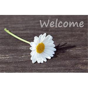 """Welcome"" Daisy Gallery Door Mat, Small"