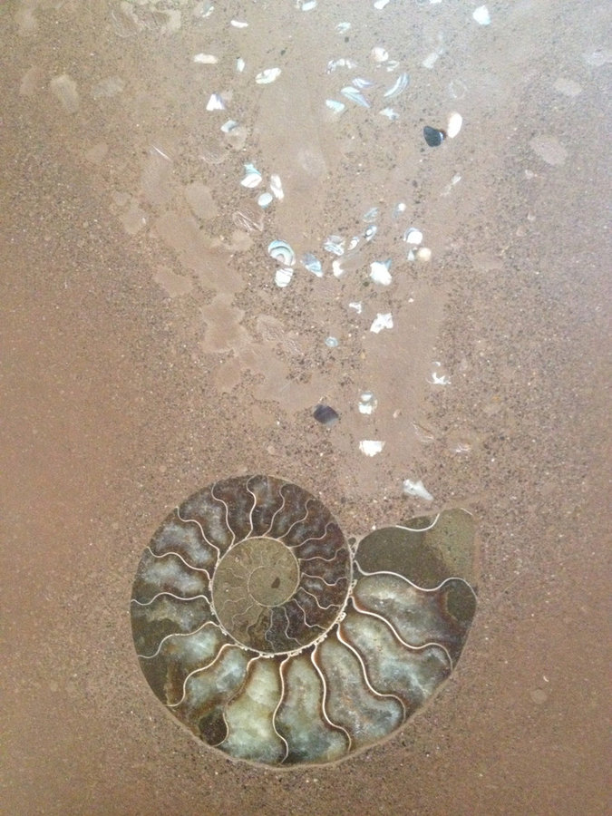 Ammonite inlay with abalone emanations