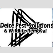 Deice Pest Solutions and Wildlife Removal's photo