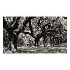 Boone Hall Plantation Oaks Charleston South Carolina Black & White Photography,